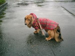 雨の日のレオ