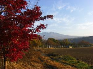 紅葉と八ヶ岳