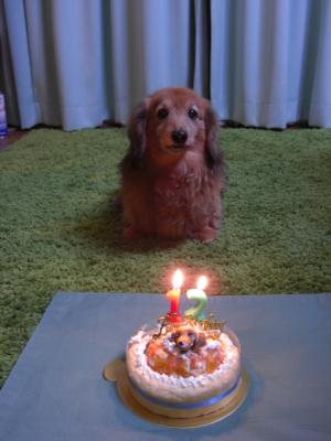 レオの誕生日 12歳になりました。
